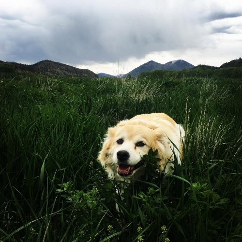 rocknroots--dog
